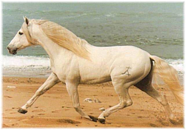 sa parlera de toutes les races de chevaux et de poney blog racesdechevauxetponey. Black Bedroom Furniture Sets. Home Design Ideas